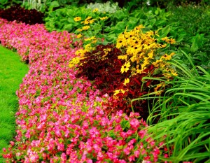 Garden1 300x233 Lawn & Garden Month: Avoid Common Garden Mistakes