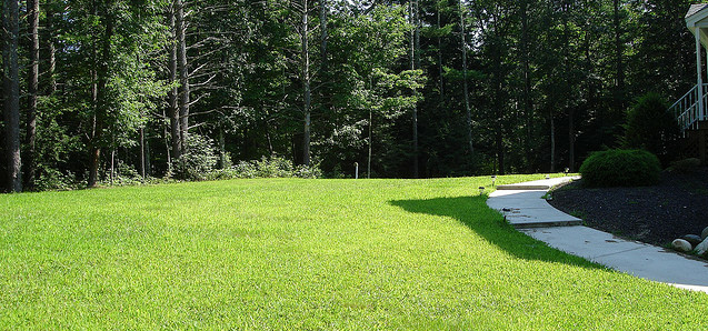 lawn 3 Easy Tips for Your Summer Yard