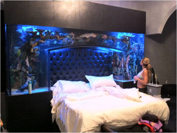 bedroom fish tank could a fish tank at home improve your health 10433