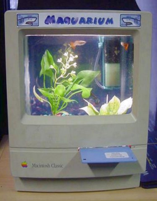 computer aquarium 16 Could Having a Fish Tank at Home Improve Your Health?