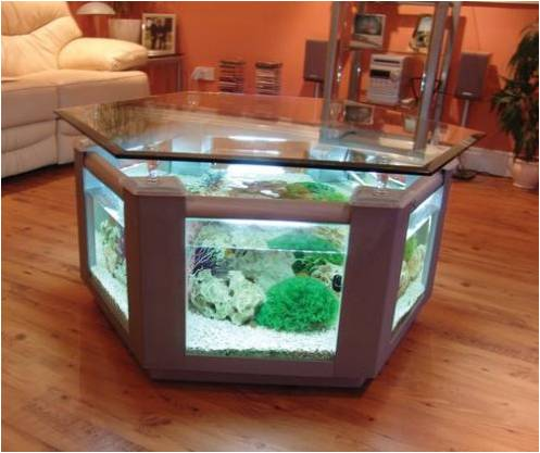 table Could Having a Fish Tank at Home Improve Your Health?