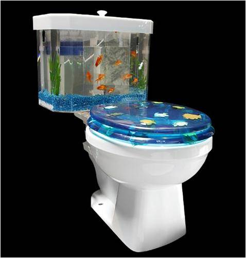 toilet Could Having a Fish Tank at Home Improve Your Health?