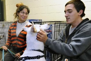 pet Sandy Aftermath: The Road To Recovery Starts with Community. The kindness of mankind can be great!