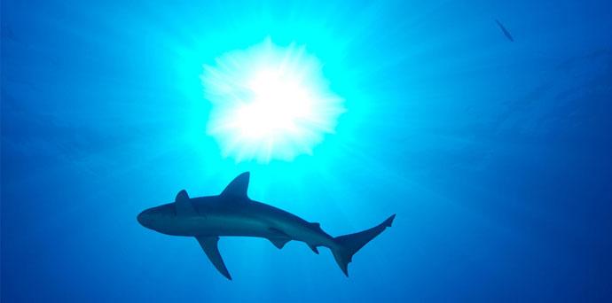 shark-header