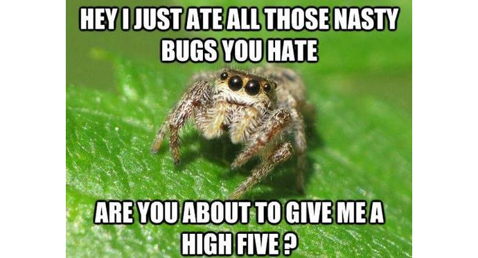 spiderheader