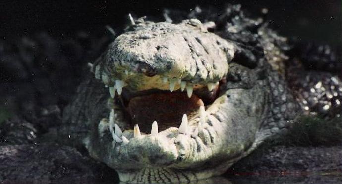 Where Do Alligators Live How To Tell Whether Gators Live