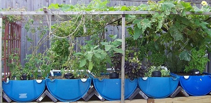 100 4670 1024x663  Backyard Aquaponics and Other Ways to Grow Your Own Food
