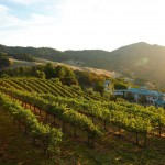 Villa Sorriso - The Vineyard