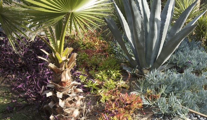 Front Yard Landscaping Ideas For Your Las Vegas Home Las Vegas