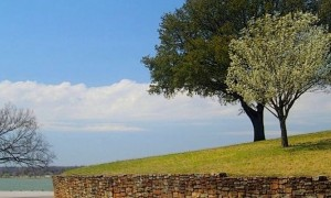 Bradford_Pear_-_Live_Oak_-_White_Rock_Lake-2-.jpg