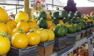 Squash-at-Farmers-Market.jpg