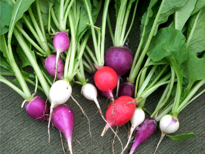Consider growing radishes in your indoor vegetable garden.
