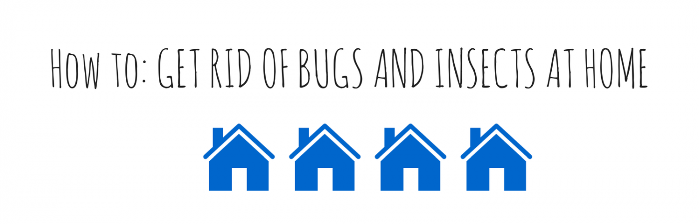 How to- GET RID OF BUGS AND INSECTS AT (2)