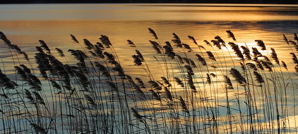 sea-grass-beach.jpg