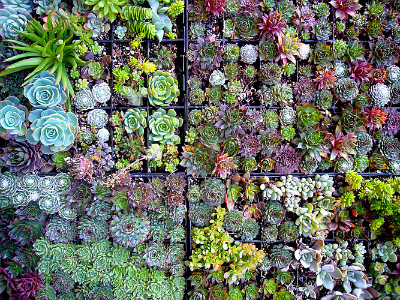 Make the Most of Your Small Outdoor Space: Succulent Wall