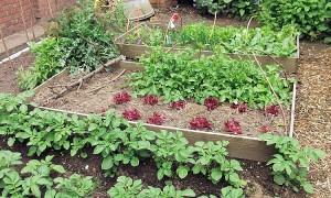 Philly-vegetable-garden.jpg