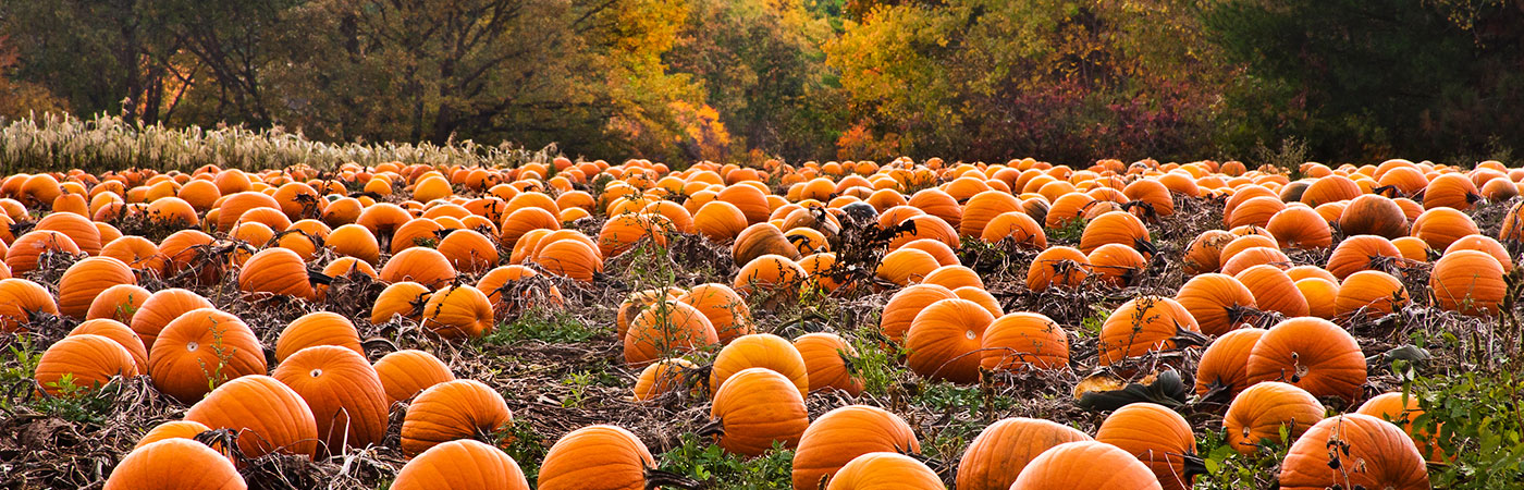 5 Essential Pumpkin Items for Your Home