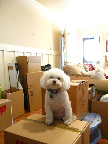 Moving day with dog