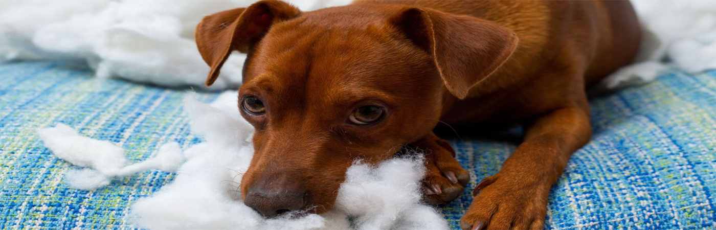 How To Deter Your Dog From Chewing Up Furniture Coldwell Banker Blue Matter