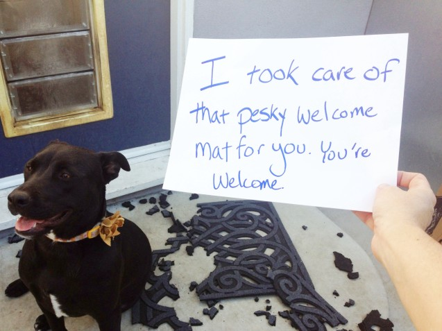 pet messes_welcome mat