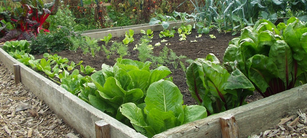 4 Smart Gardening Tips For North Texas Dallas Fort Worth