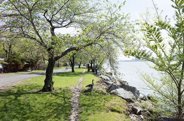 Cherry Walk in Riverside Park NYC