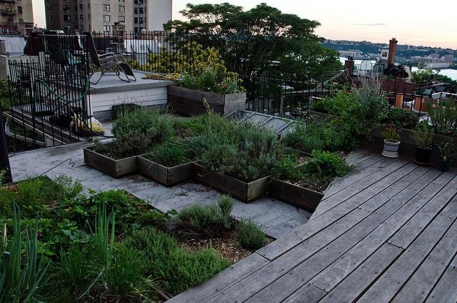 roof garden path