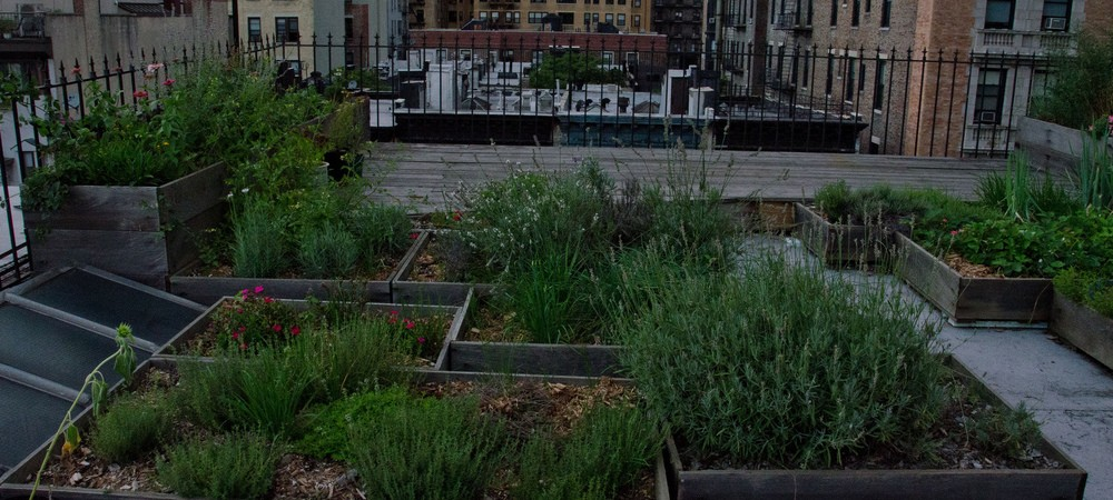 How To Create A Roof Garden In NYC | New York City | Coldwell Banker Blue  Matter