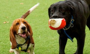 DogPark2.jpg