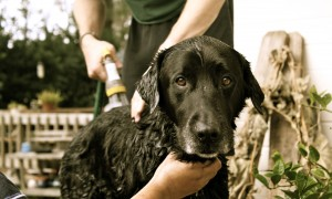 Dog Bath 3