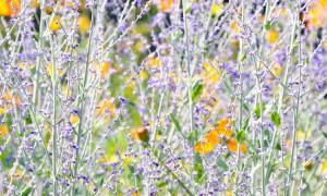 philadelphia_summer-garden.jpg