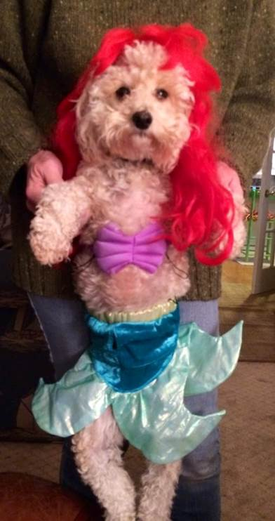 bf7ee8033a54 Little Mermaid Dog Costume & Despicable Me Dog Costume X-Large Sc 1 ...