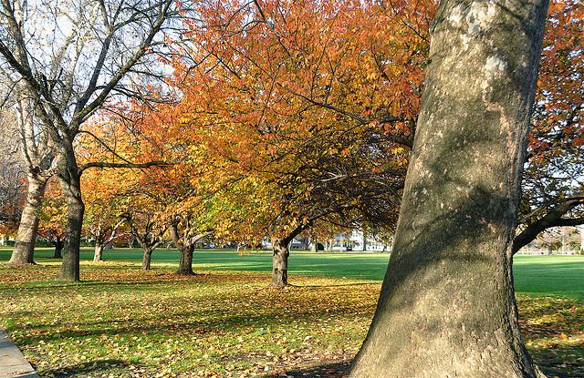 Philadelphia Park in the Fall - Flickr/Kevin Burkett