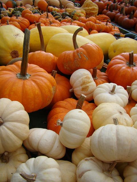 Munchkin Pumpkins - Flickr/VasenkaPhotography