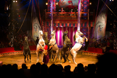 Things to Do with Kids in NYC: Visit the Circus