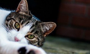 adopt-a-rescue-pet-4.jpg