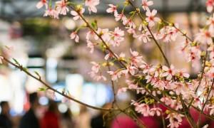 Flower_show-NYC.jpg