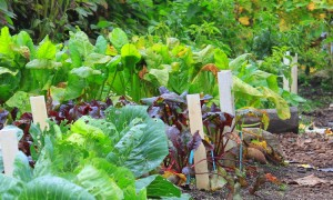 Gardening_new.jpg