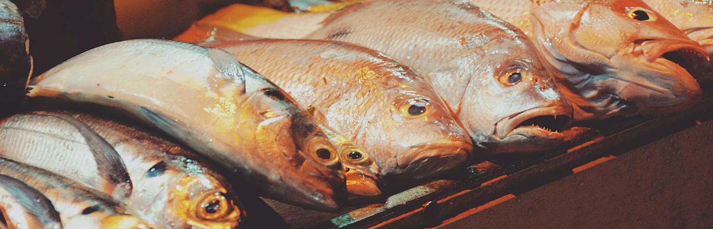 Fish_NJ2.jpg