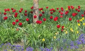 Spring_yard.jpg
