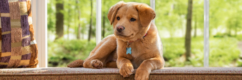 Bringing Home A Newly Adopted Dog