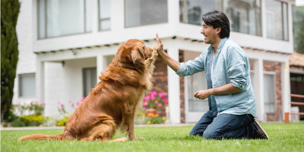 3 Important Tips for Welcoming Home Your Newly Adopted Dog