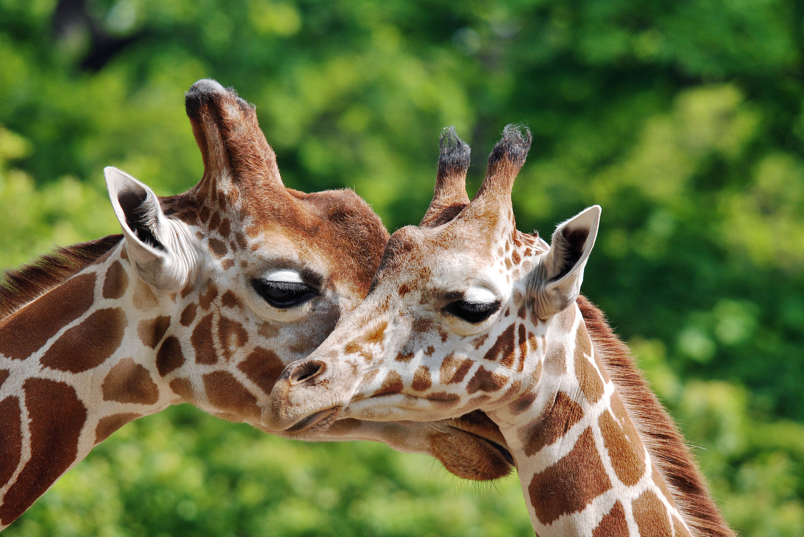 Kid Friendly Activities in Dallas: Dallas Zoo