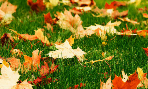 leaves_header
