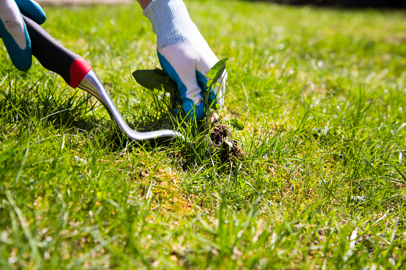 Fall Yard Care Tips: Take Care of Your Lawn