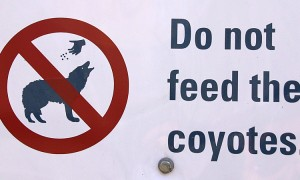 Sign For Coyote