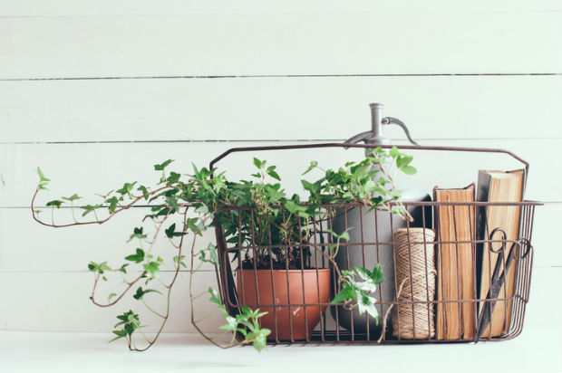 Decorating your home with indoor plants is affordable and stress ...