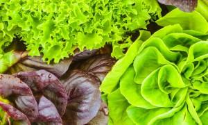 lettuce_header