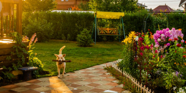 04.14.17 Millennial Home Buying Trends - dog in yard