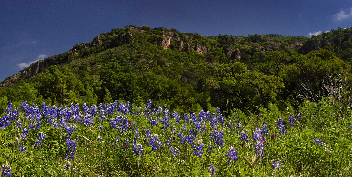 a panoramic image of bluebonnets in a field below the cliffs of texas hill country.